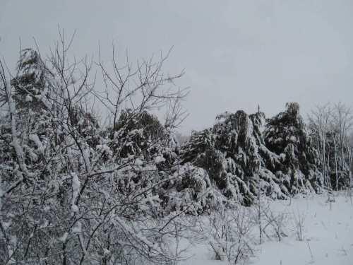 Days of Heavy Snow