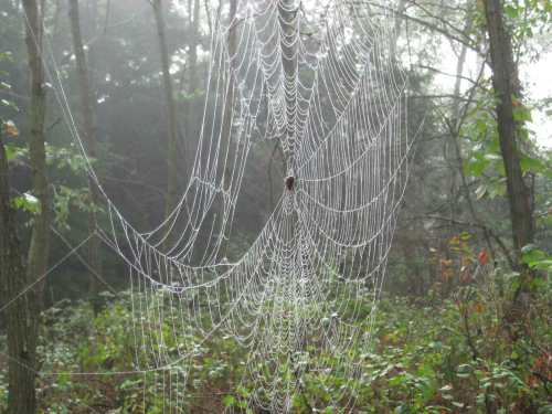 Web Time